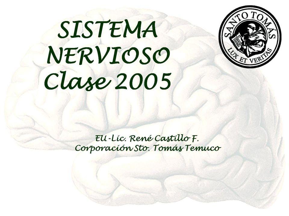 EU-Lic. René Castillo F. CEREBRO Cerebelo Protuberancia Bulbo raquídeo