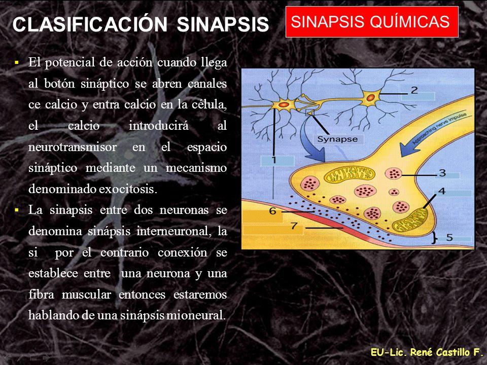 EU-Lic. René Castillo F. CLASIFICACIÓN SINAPSIS SINAPSIS QUÍMICAS El potencial de acción cuando llega al botón sináptico se abren canales ce calcio y