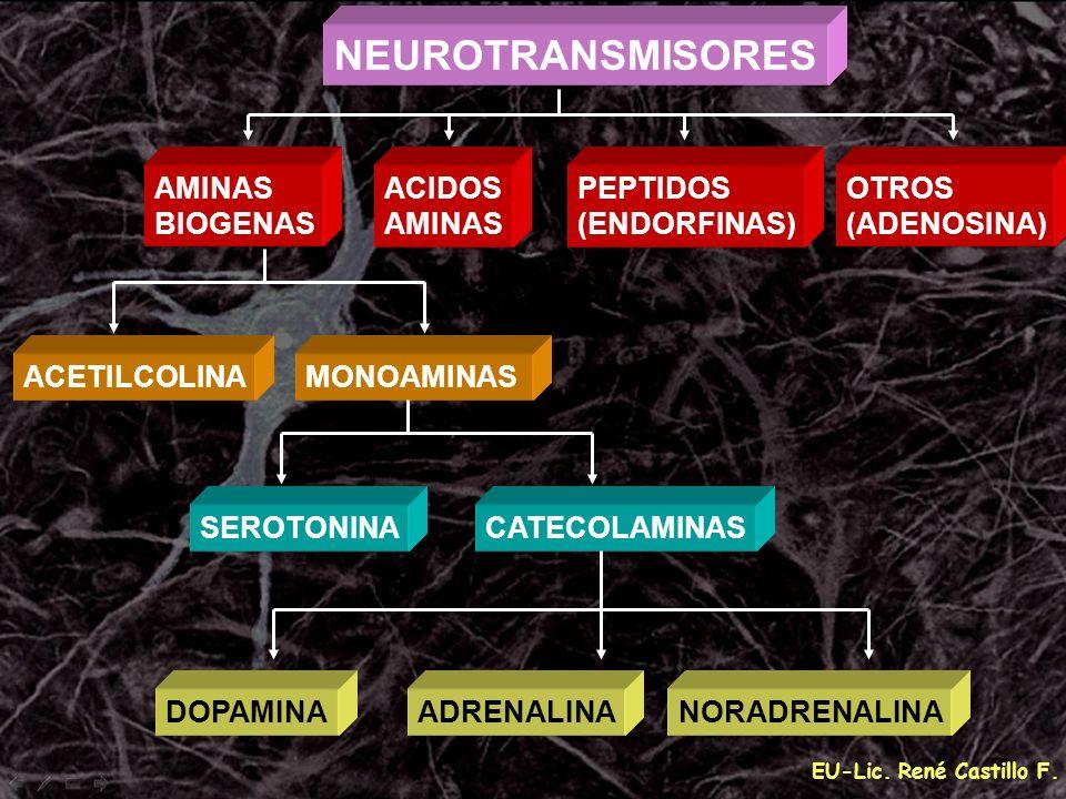 EU-Lic. René Castillo F. AMINAS BIOGENAS ACIDOS AMINAS PEPTIDOS (ENDORFINAS) OTROS (ADENOSINA) ACETILCOLINAMONOAMINAS SEROTONINACATECOLAMINAS DOPAMINA