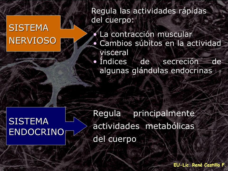 EU-Lic. René Castillo F. SISTEMANERVIOSO SISTEMAENDOCRINO La contracción muscular Cambios súbitos en la actividad visceral Índices de secreción de alg