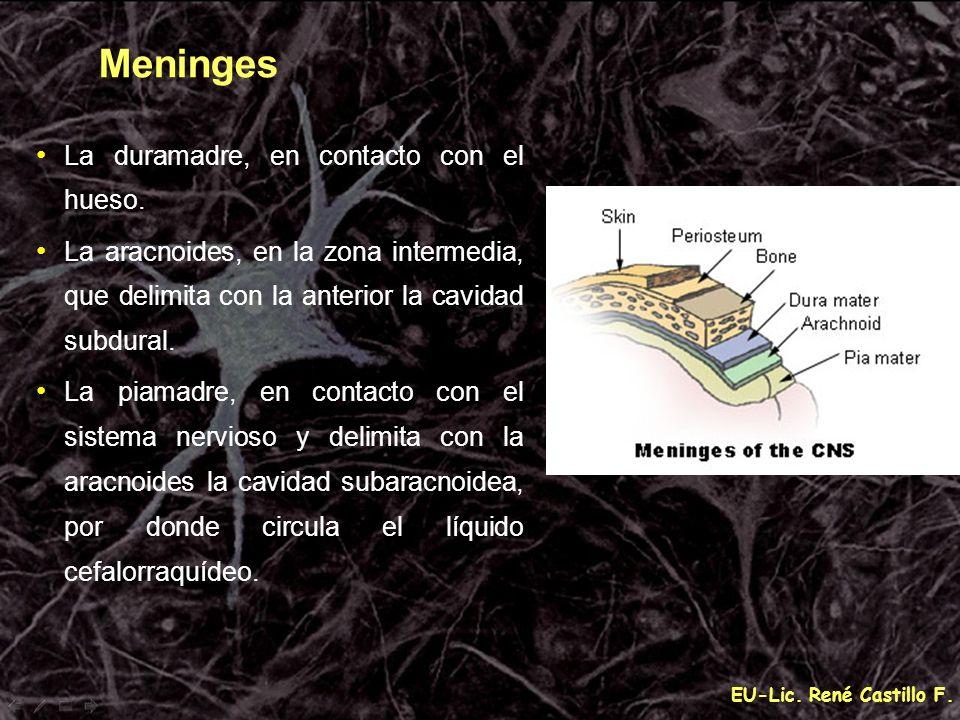 EU-Lic. René Castillo F. Meninges La duramadre, en contacto con el hueso. La aracnoides, en la zona intermedia, que delimita con la anterior la cavida
