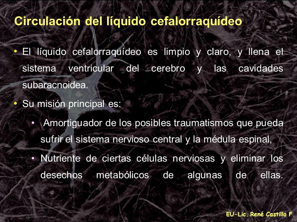 EU-Lic. René Castillo F. Circulación del líquido cefalorraquídeo El líquido cefalorraquídeo es limpio y claro, y llena el sistema ventricular del cere