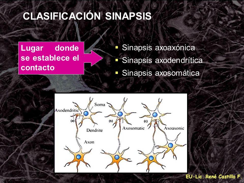 EU-Lic. René Castillo F. CLASIFICACIÓN SINAPSIS Lugar donde se establece el contacto Sinapsis axoaxónica Sinapsis axodendrítica Sinapsis axosomática