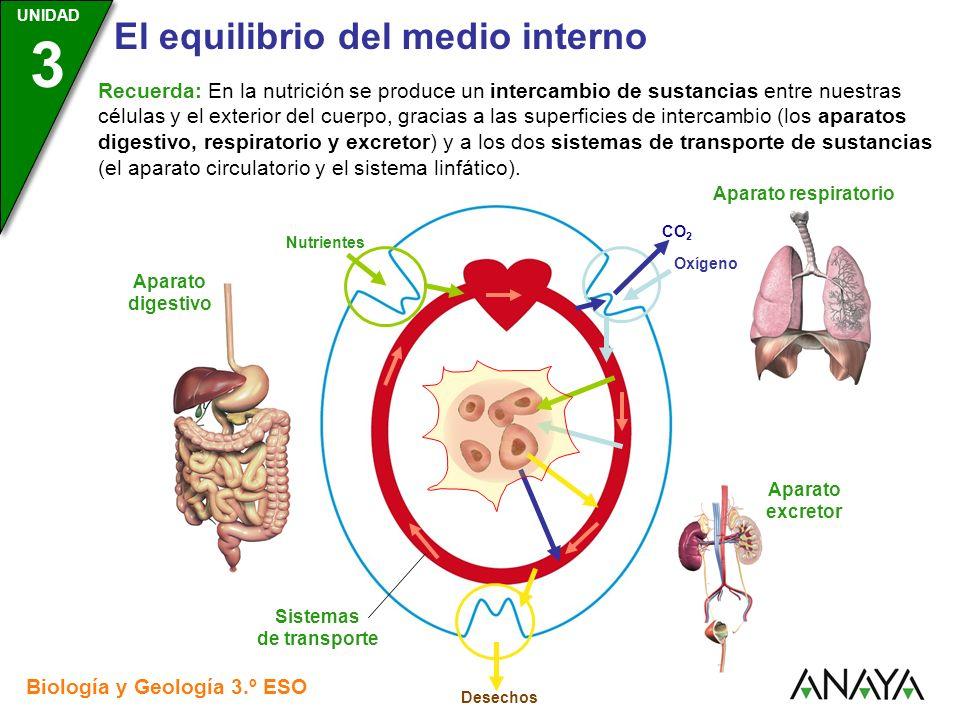UNIDAD 3 El equilibrio del medio interno Biología y Geología 3.º ESO UNIDAD 3 Este intercambio no es directo, sino que se realiza a través del llamado medio interno, que se compone de tres líquidos corporales: La sangre, que llena el aparato circulatorio La linfa, que llena el sistema linfático El plasma intersticial, que es el líquido que rodea a las células