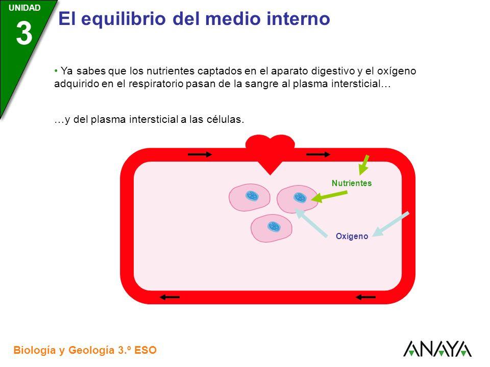 UNIDAD 3 El equilibrio del medio interno Biología y Geología 3.º ESO UNIDAD 3 Ya sabes que los nutrientes captados en el aparato digestivo y el oxígen