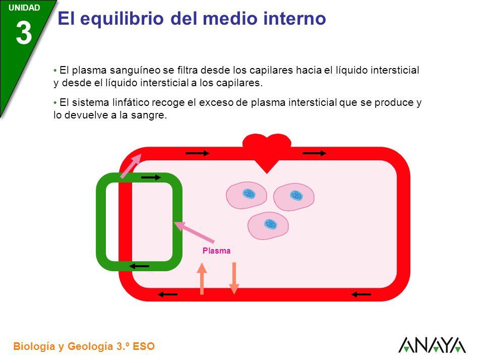 UNIDAD 3 El equilibrio del medio interno Biología y Geología 3.º ESO UNIDAD 3 El plasma sanguíneo se filtra desde los capilares hacia el líquido inter