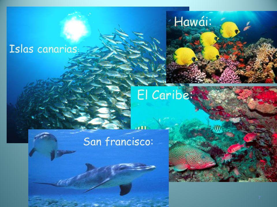 7 Islas canarias : El Caribe: Hawái: San francisco: