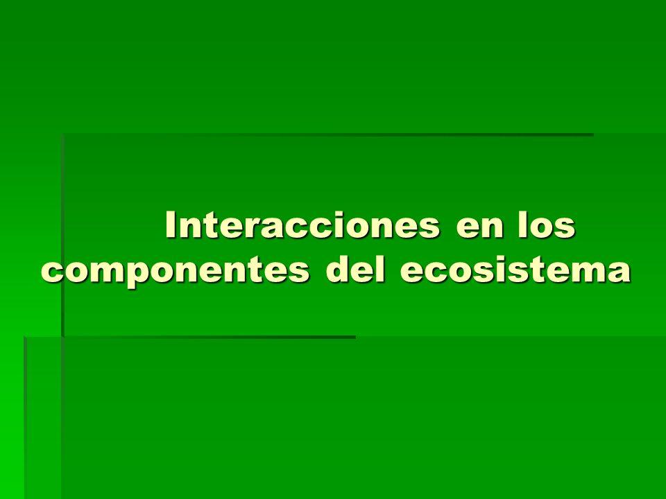 Interacciones en los componentes del ecosistema Interacciones en los componentes del ecosistema