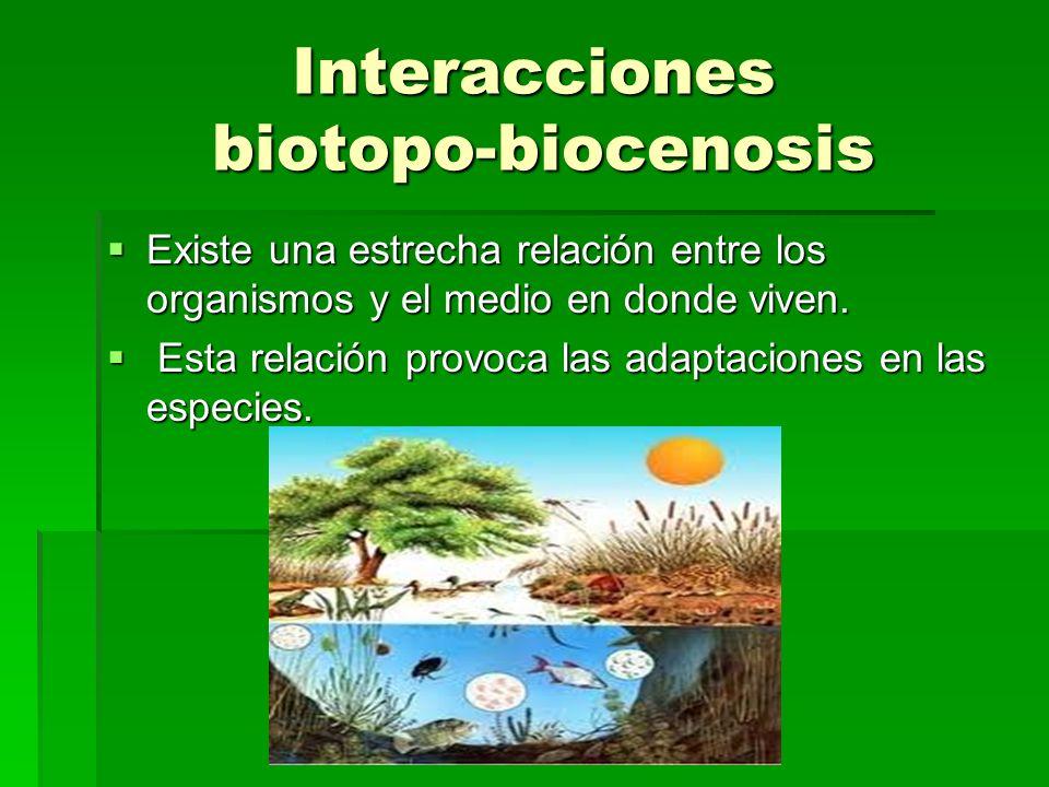 Interacciones biotopo-biocenosis Existe una estrecha relación entre los organismos y el medio en donde viven. Existe una estrecha relación entre los o