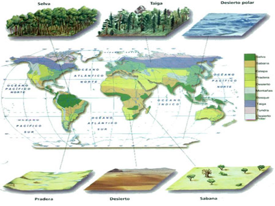 Ecosistemas terrestres Ecosistemas terrestres Ecosistemas terrestres son aquellos que se dan sobre la capa de tierra superficial de la Biosfera. Ecosi