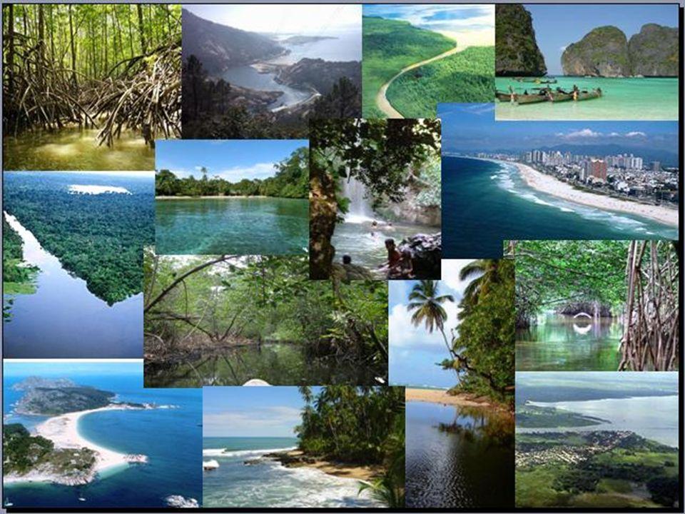 Ecosistemas Acuáticos Ecosistemas Acuáticos Se entiende por ecosistemas acuáticos a todos aquellos ecosistemas que tienen por biotopo algún cuerpo de