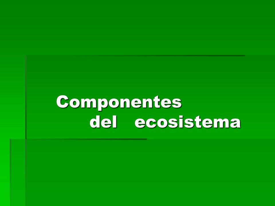 Componentes del ecosistema Componentes del ecosistema