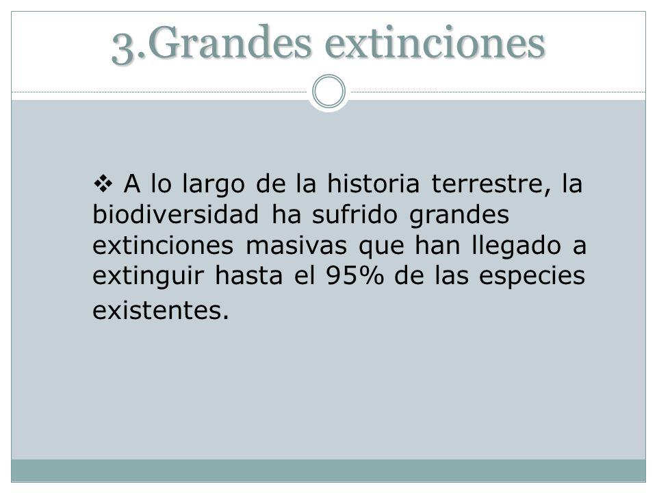 3.Grandes extinciones A lo largo de la historia terrestre, la biodiversidad ha sufrido grandes extinciones masivas que han llegado a extinguir hasta e
