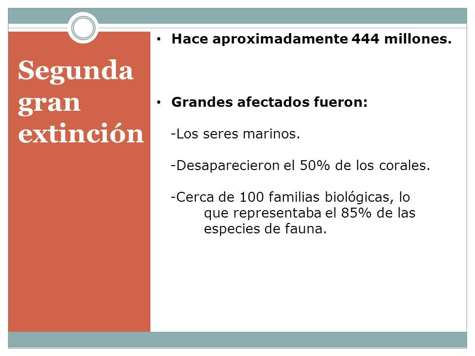 Segunda gran extinción Hace aproximadamente 444 millones. Grandes afectados fueron: -Los seres marinos. -Desaparecieron el 50% de los corales. -Cerca