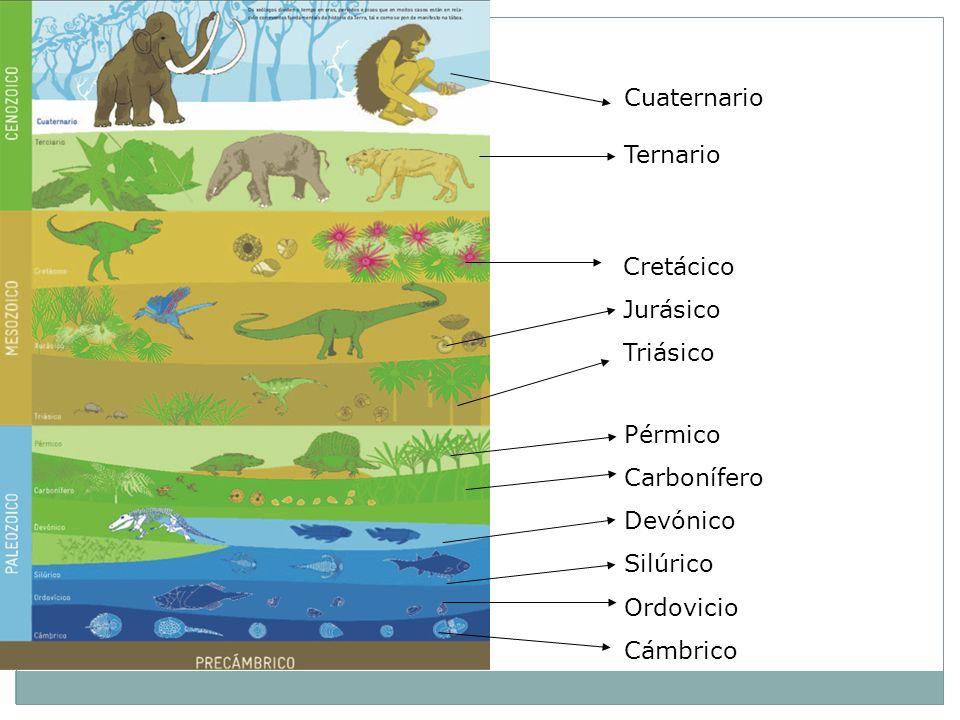 Pérmico Carbonífero Devónico Silúrico Ordovicio Cámbrico Cretácico Jurásico Triásico Cuaternario Ternario