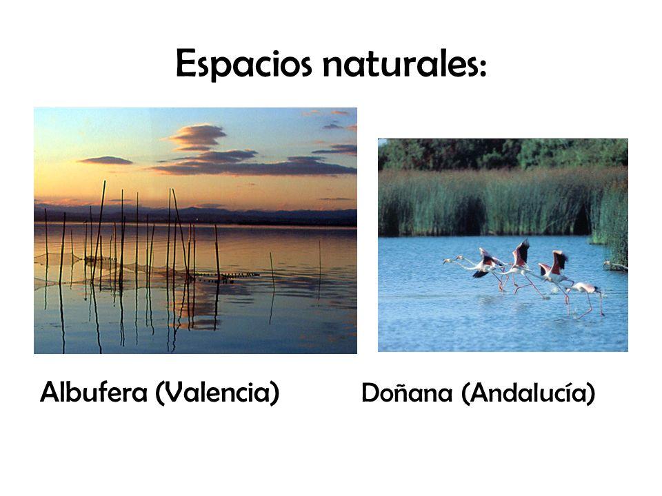 Espacios naturales: Albufera (Valencia) Doñana (Andalucía)