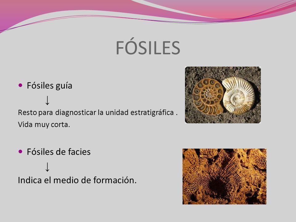 FÓSILES Fósiles guía Resto para diagnosticar la unidad estratigráfica. Vida muy corta. Fósiles de facies Indica el medio de formación.
