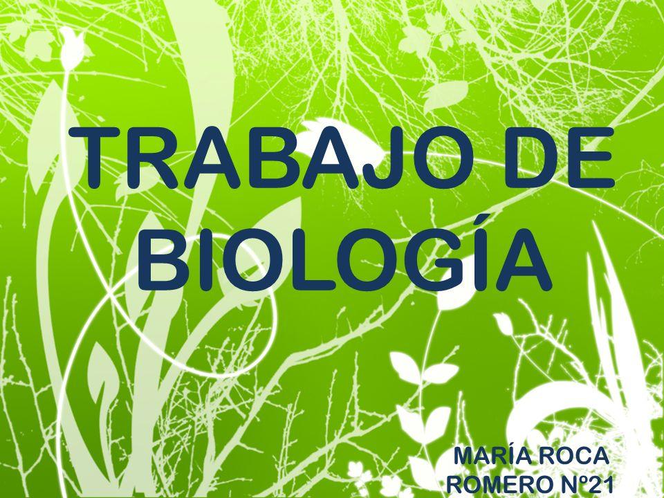 TRABAJO DE BIOLOGÍA MARÍA ROCA ROMERO Nº21
