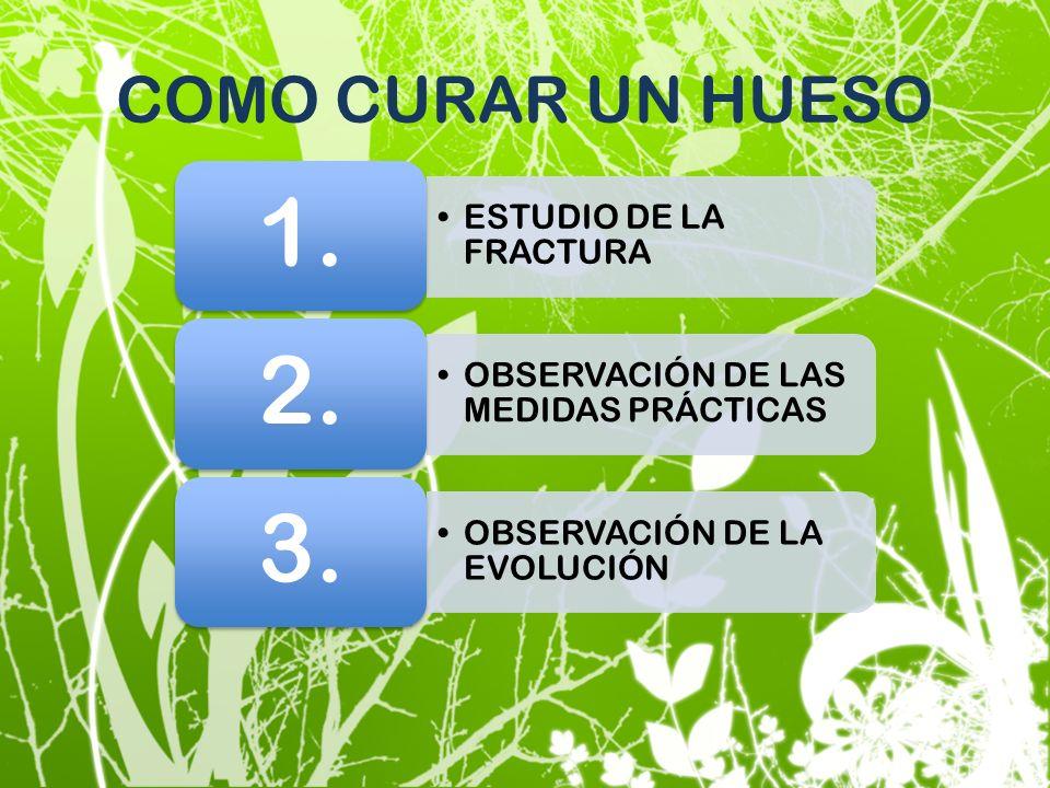 COMO CURAR UN HUESO ESTUDIO DE LA FRACTURA 1. OBSERVACIÓN DE LAS MEDIDAS PRÁCTICAS 2. OBSERVACIÓN DE LA EVOLUCIÓN 3.