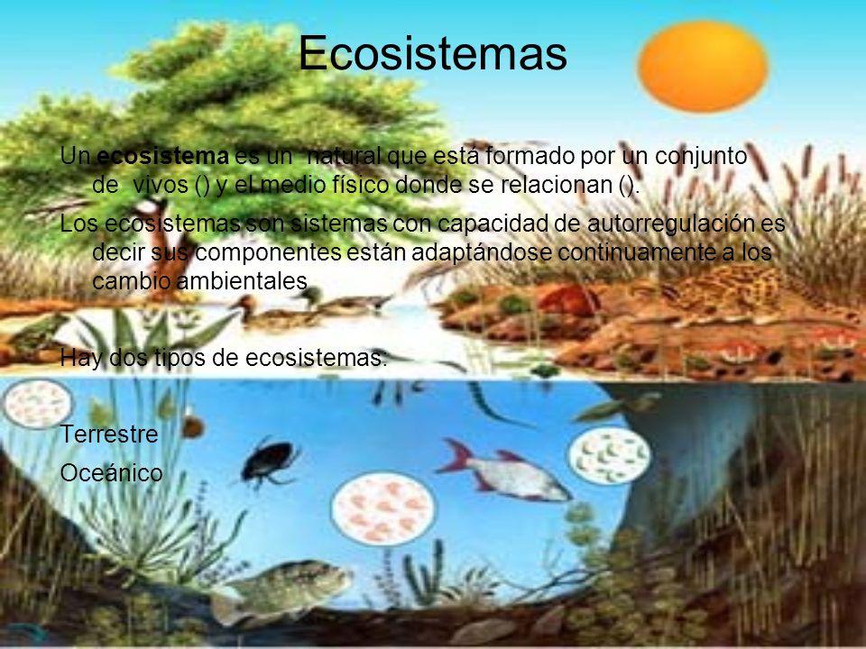 Ecosistemas Un ecosistema es un natural que está formado por un conjunto de vivos () y el medio físico donde se relacionan (). Los ecosistemas son sis