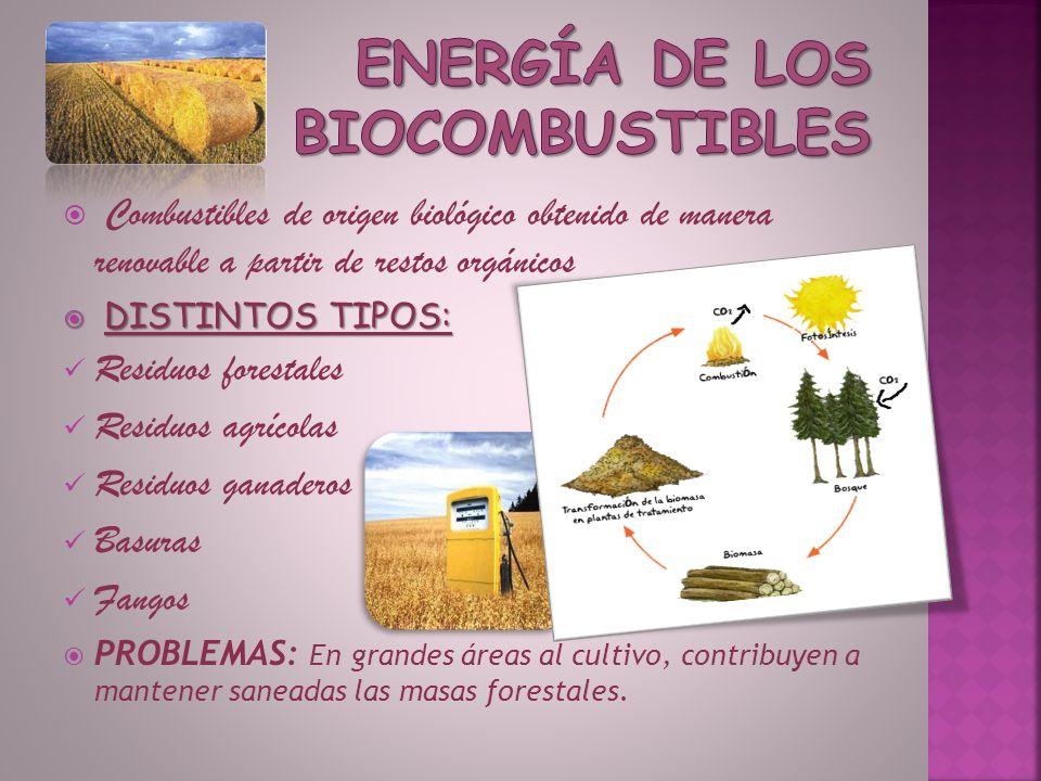 Energía obtenida del viento Localización en muchas zonas, como en Tarifa, Málaga y Almería… También existen parques eólicos marinos PROBLEMAS: Grandes extensiones de terreno, impacto estético, ruidos por parte de las turbinas