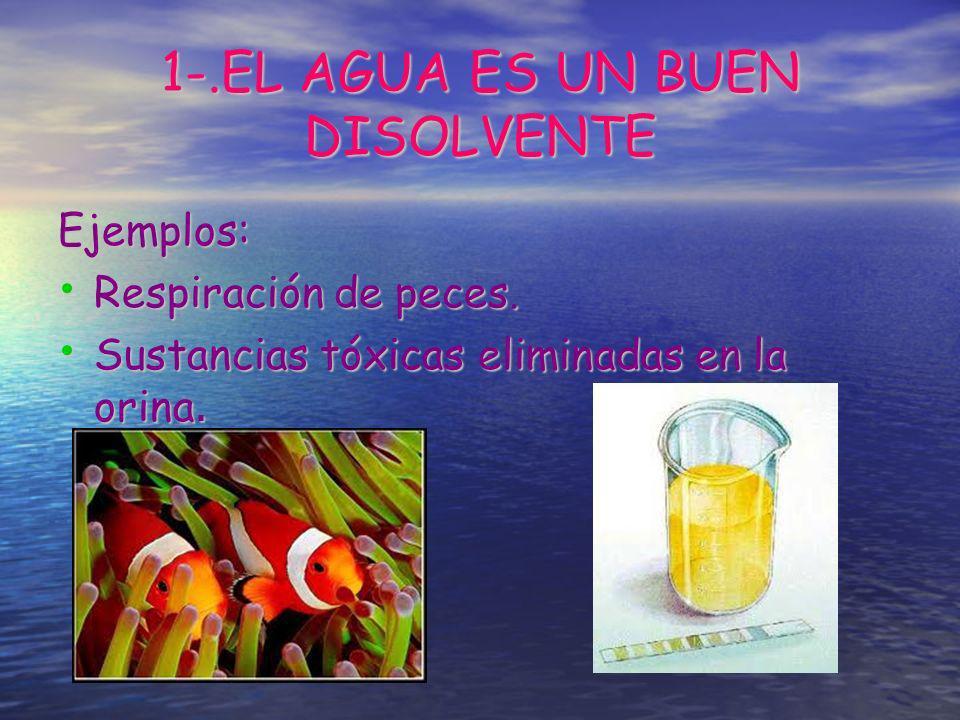 1-.EL AGUA ES UN BUEN DISOLVENTE Ejemplos: Respiración de peces. Respiración de peces. Sustancias tóxicas eliminadas en la orina. Sustancias tóxicas e