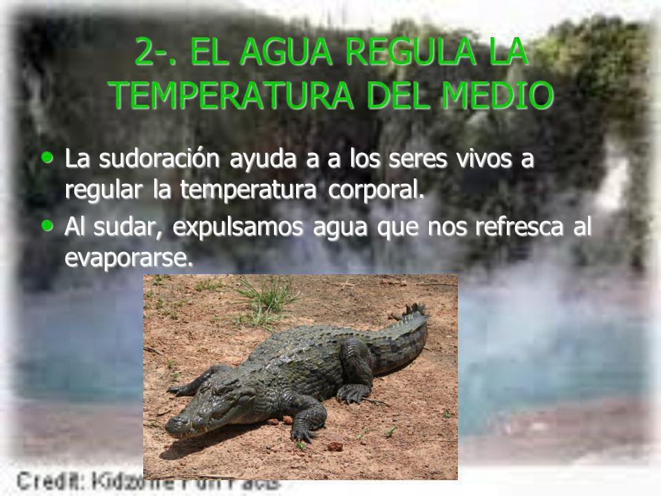 2-. EL AGUA REGULA LA TEMPERATURA DEL MEDIO La sudoración ayuda a a los seres vivos a regular la temperatura corporal. La sudoración ayuda a a los ser