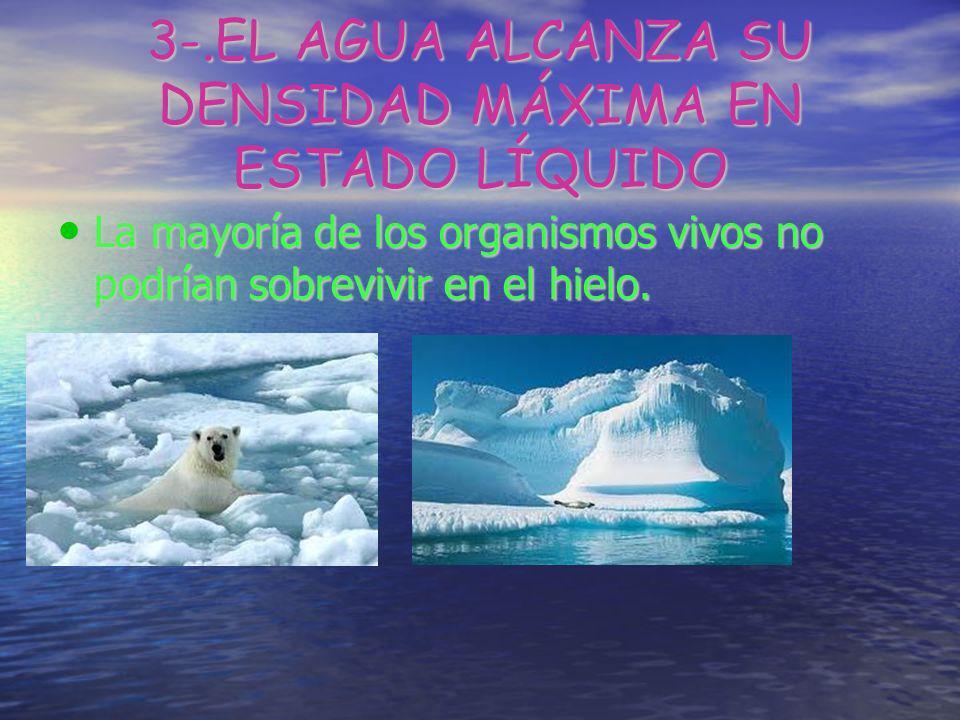 3-.EL AGUA ALCANZA SU DENSIDAD MÁXIMA EN ESTADO LÍQUIDO La mayoría de los organismos vivos no podrían sobrevivir en el hielo. La mayoría de los organi