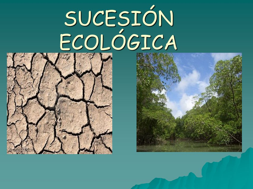 SUCESIÓN ECOLÓGICA