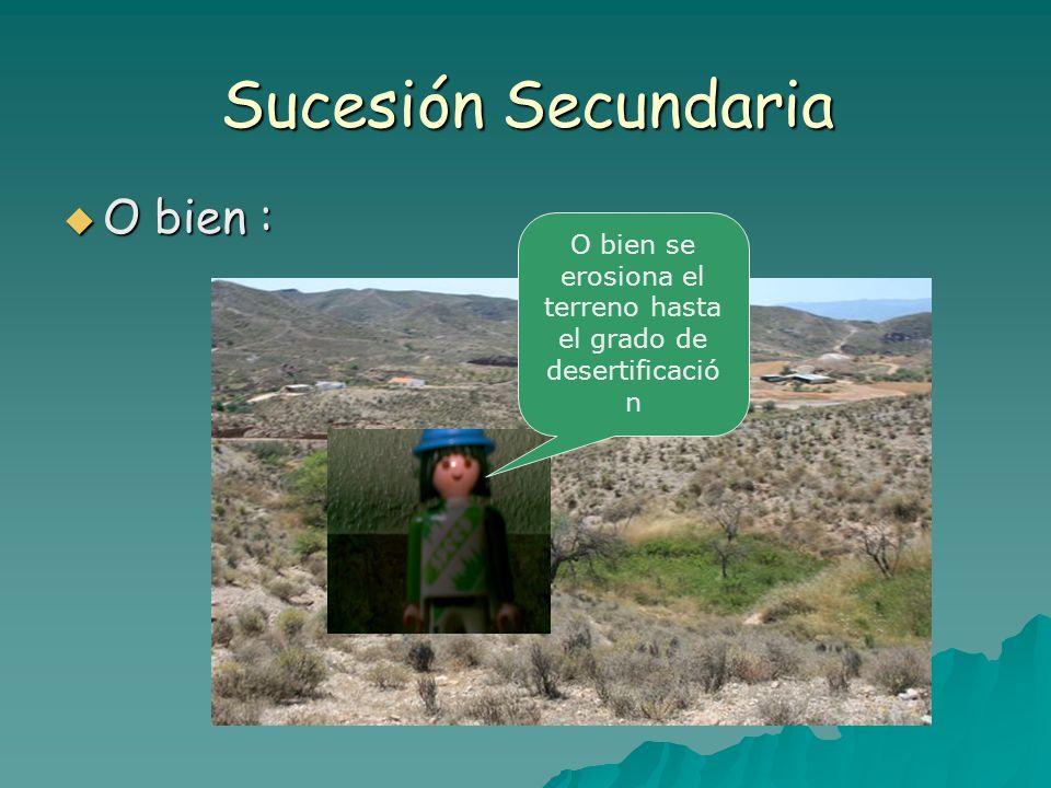 Sucesión Secundaria O bien : O bien : O bien se erosiona el terreno hasta el grado de desertificació n