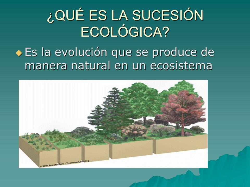 ¿QUÉ ES LA SUCESIÓN ECOLÓGICA? Es la evolución que se produce de manera natural en un ecosistema Es la evolución que se produce de manera natural en u