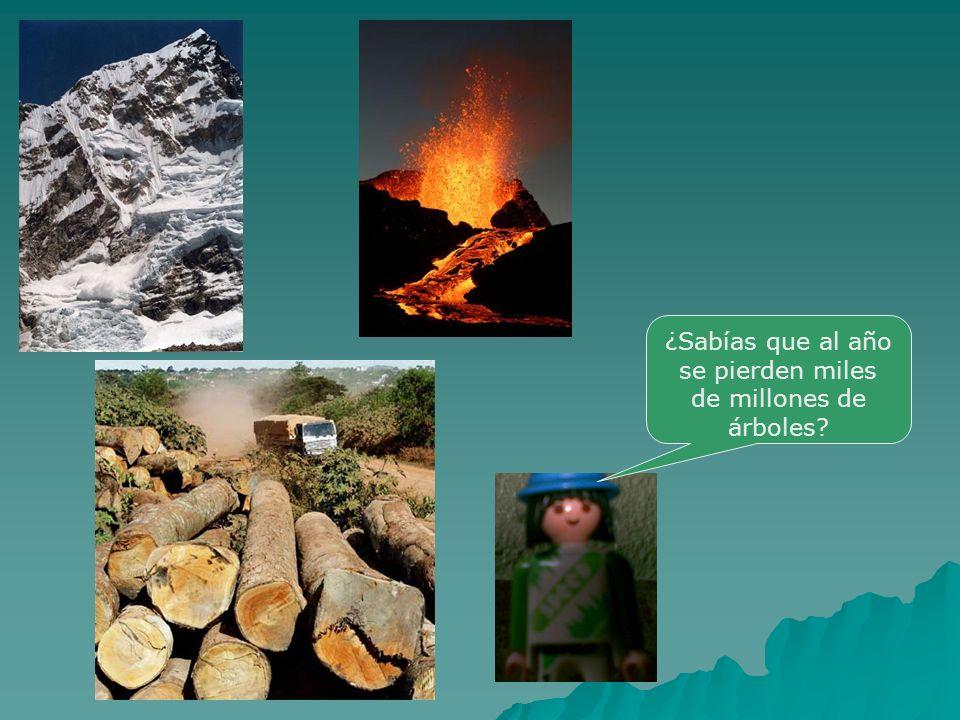 ¿Sabías que al año se pierden miles de millones de árboles?