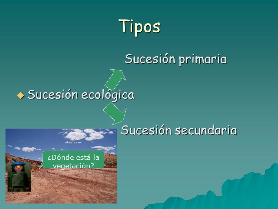 Sucesión Primaria 1ª ETAPA 1ª ETAPA En un terreno virgen se forman únicamente rocas En un terreno virgen se forman únicamente rocas ¿Sabías que todavía quedan en el mundo muchos Km.