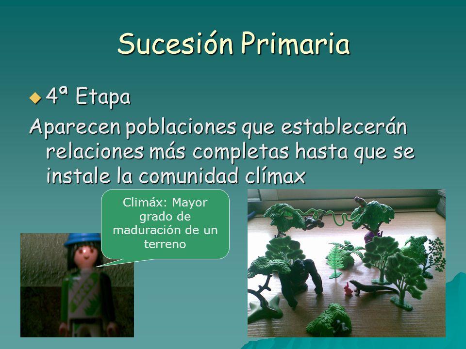 Sucesión Secundaria 1º el terreno se hace inmaduro por pérdidas de componentes.