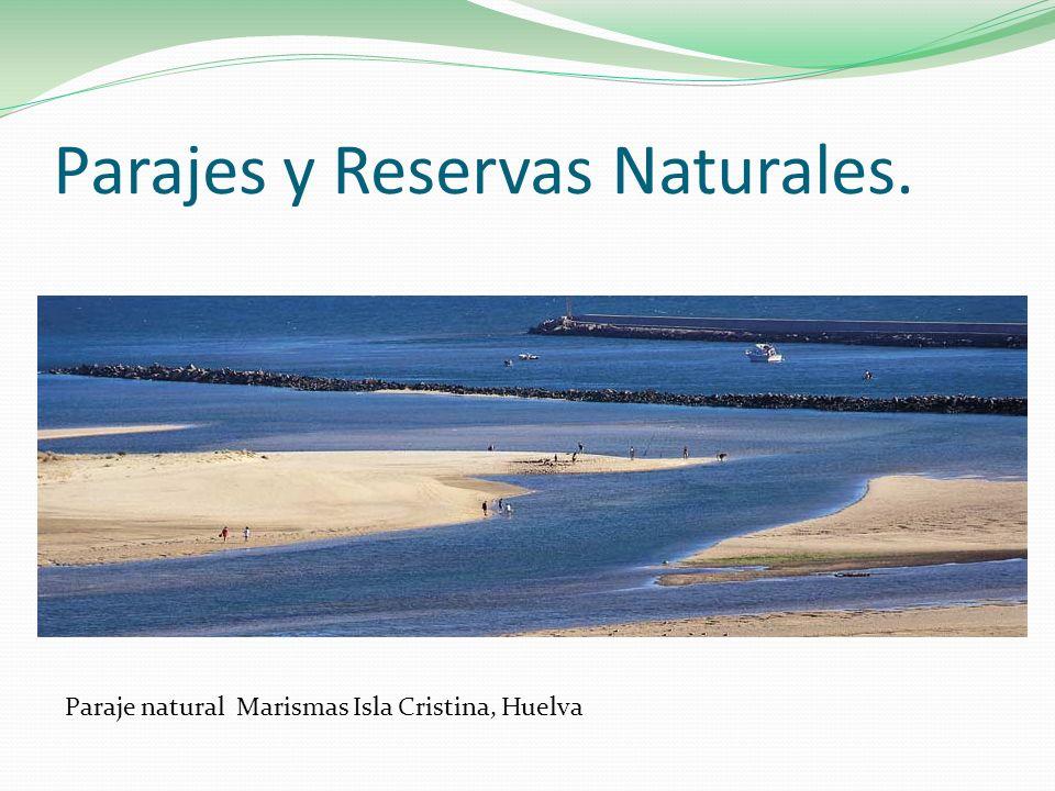Parajes y Reservas Naturales. Paraje natural Marismas Isla Cristina, Huelva