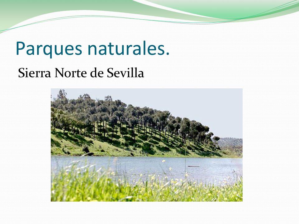 Parques naturales. Sierra Norte de Sevilla
