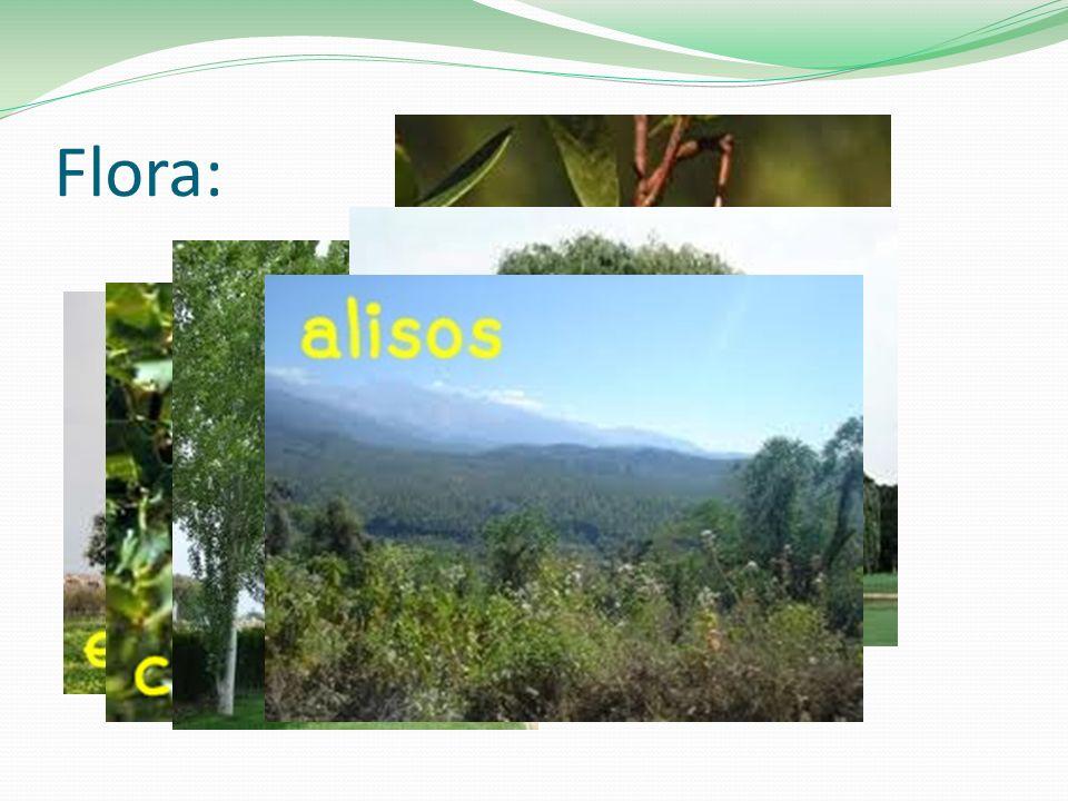 Flora: