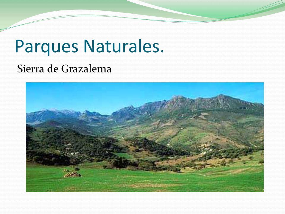 Parques Naturales. Sierra de Grazalema