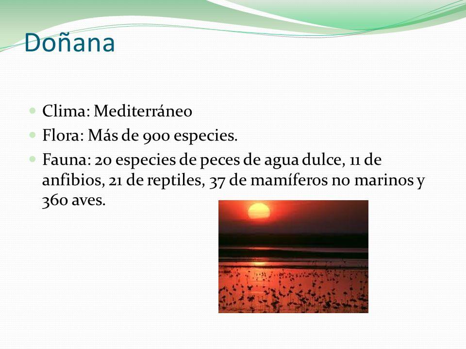 Doñana Clima: Mediterráneo Flora: Más de 900 especies. Fauna: 20 especies de peces de agua dulce, 11 de anfibios, 21 de reptiles, 37 de mamíferos no m