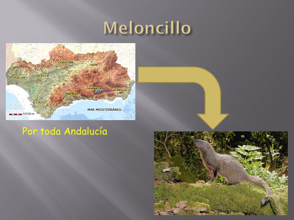 Por toda Andalucía