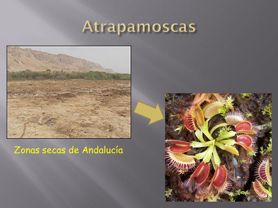 Zonas secas de Andalucía