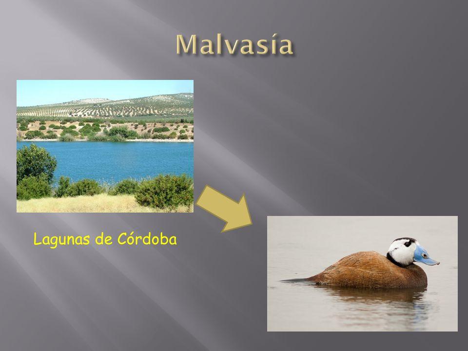Lagunas de Córdoba
