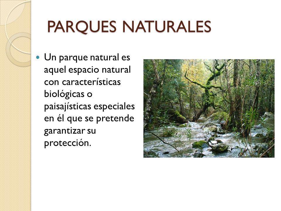 PARQUES NATURALES Un parque natural es aquel espacio natural con características biológicas o paisajísticas especiales en él que se pretende garantiza