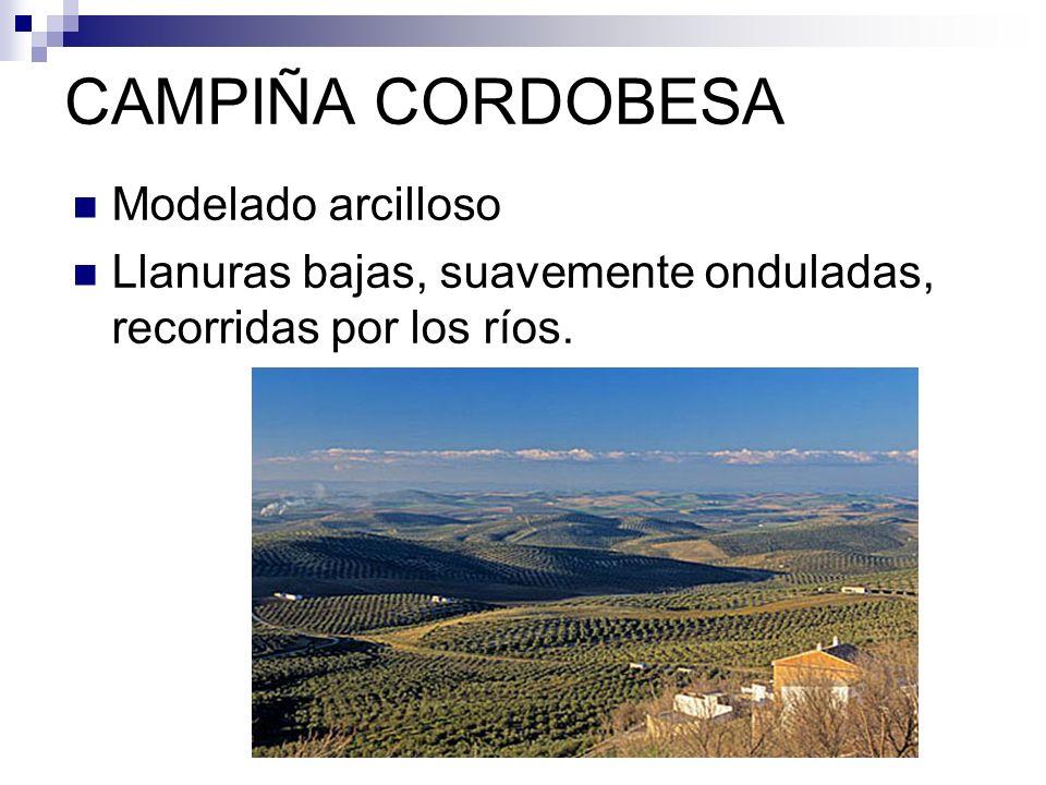 MODELADO VOLCÁNICO ISLAS CANARIAS Era Terciaria y Era Cuaternaria Rocas magmáticas.