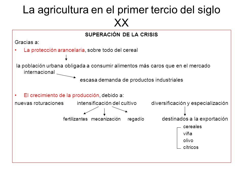 La agricultura en el primer tercio del siglo XX SUPERACIÓN DE LA CRISIS Gracias a: La protección arancelaria, sobre todo del cereal la población urban