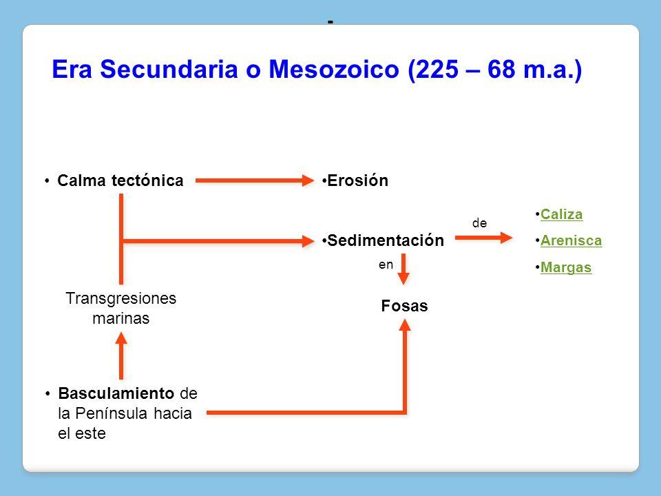 Era Secundaria o Mesozoico (225 – 68 m.a.) Calma tectónicaErosión Sedimentación en Caliza Arenisca Margas Transgresiones marinas Fosas de - Basculamie