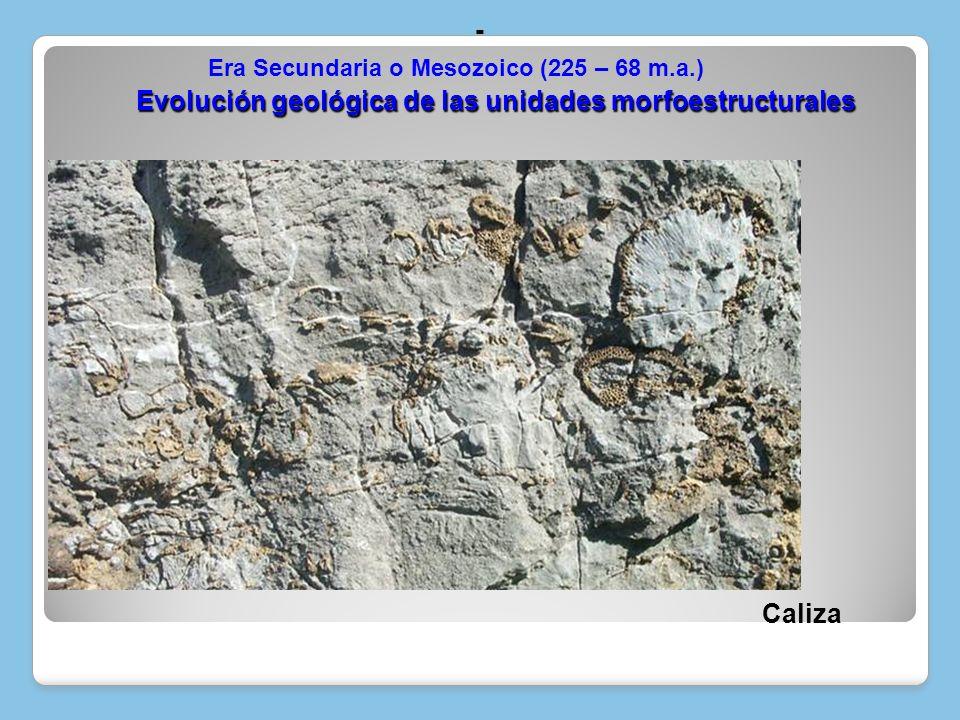 Caliza Evolución geológica de las unidades morfoestructurales Evolución geológica de las unidades morfoestructurales - Era Secundaria o Mesozoico (225