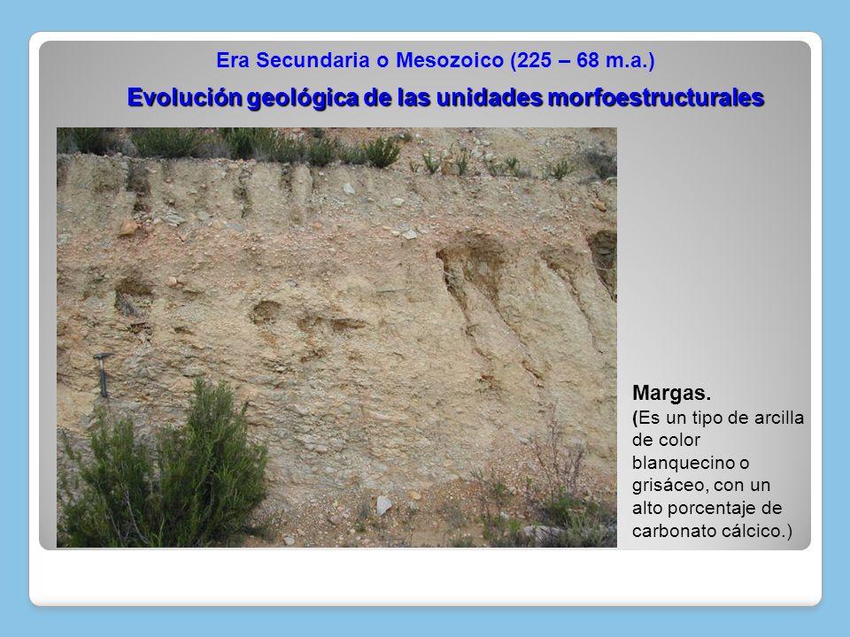 Margas. (Es un tipo de arcilla de color blanquecino o grisáceo, con un alto porcentaje de carbonato cálcico.) Evolución geológica de las unidades morf