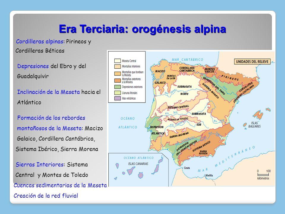 Era Terciaria: orogénesis alpina Cordilleras alpinas: Pirineos y Cordilleras Béticas Depresiones del Ebro y del Guadalquivir Inclinación de la Meseta
