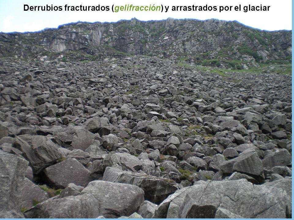 Derrubios fracturados (gelifracción) y arrastrados por el glaciar